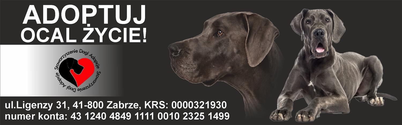 Prosimy o 1% podatku na pomoc dla zwierząt - Dogi Adopcje